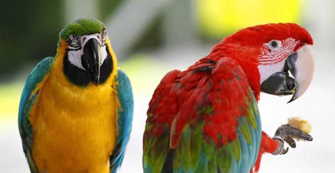 Papağan Türleri ve Özellikleri Nelerdir?