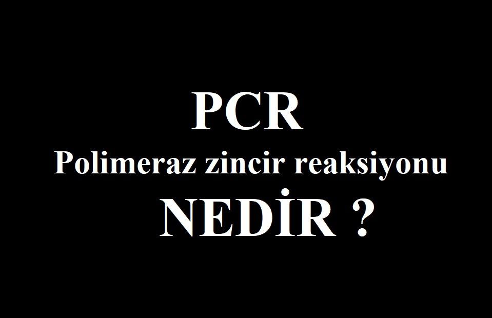 PCR nasıl çalışır?- Polimeraz zincir reaksiyonu
