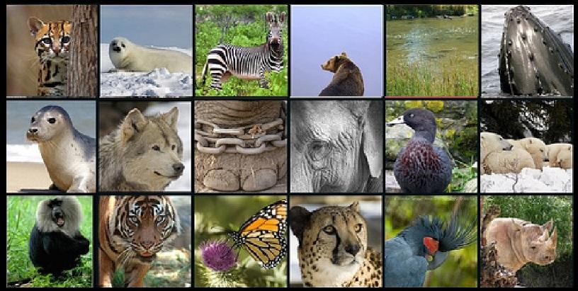 Nesli Tükenen Hayvanların İsimleri