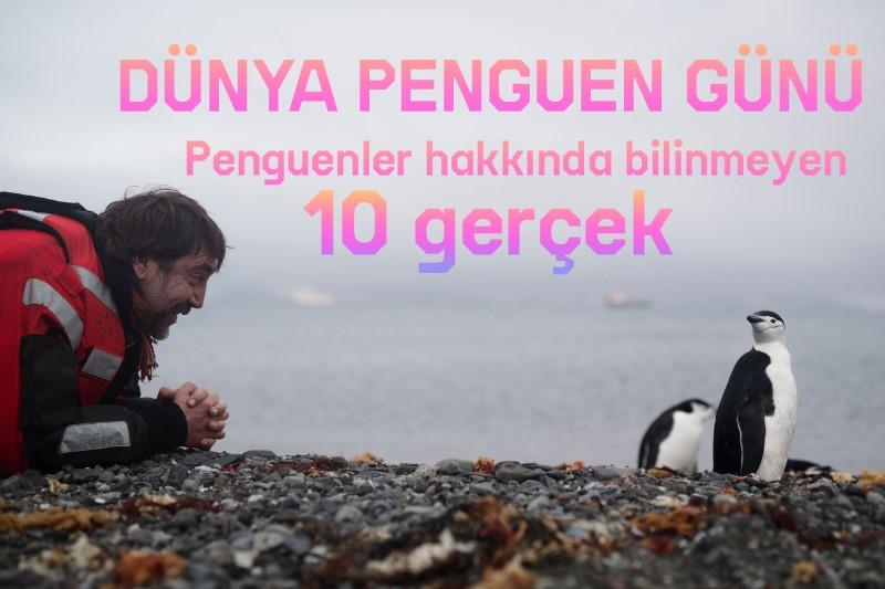 Penguenler hakkında bilinmeyen 10 gerçek