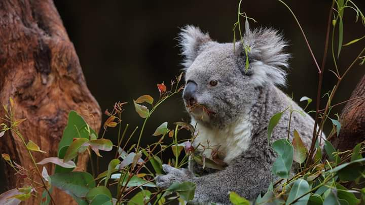 Fotoğraf; Prof.Dr Mustafa Sözen - Perth Zoo, Western Australia, 14.07.2017