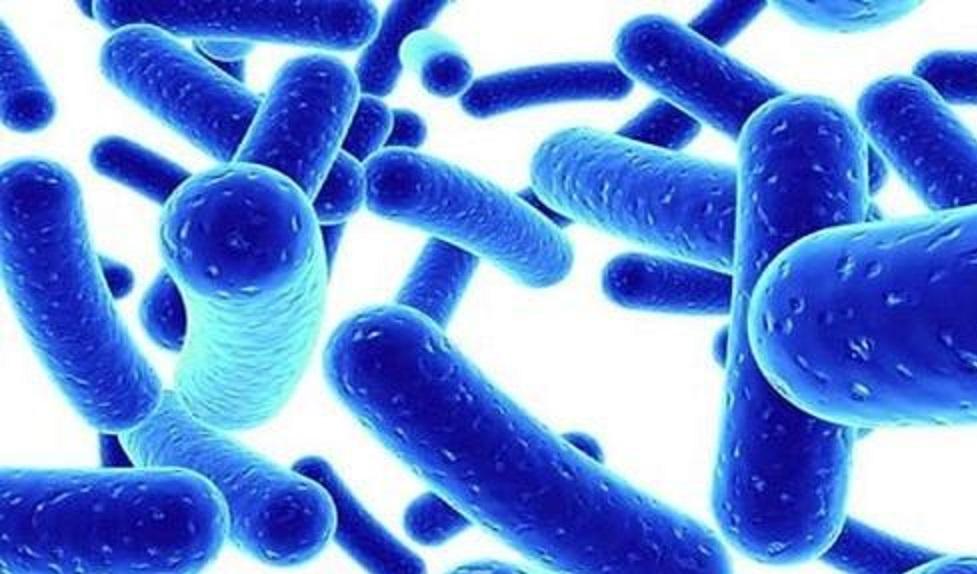 Probiyotik bakteri Lactobacillus acidophilus ile yapılmış bir çalışma