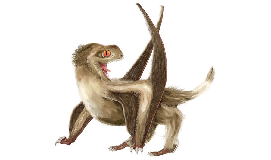 Kuş Tüyüne Benzer Tüyleri Olan Pterozor Fosili Bulundu