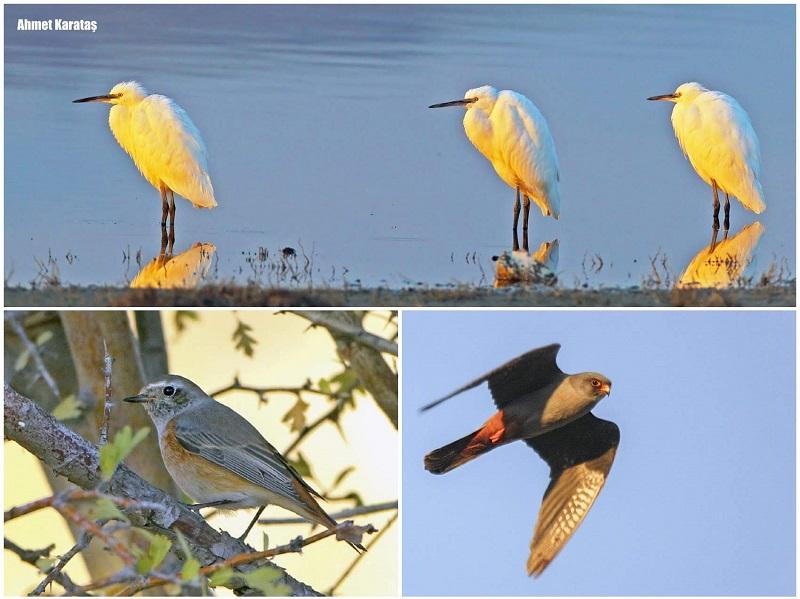 25. Avrupa Kuş Gözlem Günü'nü Niğde ilimizde de tamamlandı