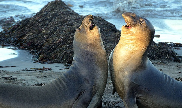 Deniz Fili Hakkında Bilgi