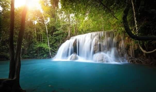 Musluktan gelen her su damlasının arkasında bir orman ekosistemi bulunur.