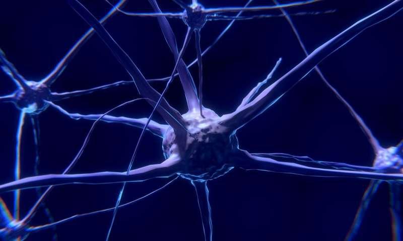 Sinir hücreleri genetik materyallerini nasıl onarır?