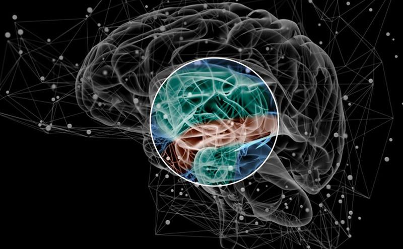 Sinir sistemimiz alışkanlıkları nasıl oluşturur?