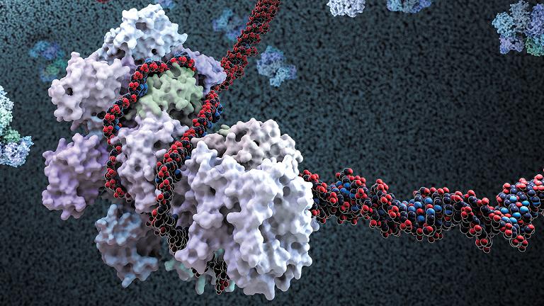 CRISPR'nin genom düzenleme makasını kontrol dışı bırakmaktan alıkoyma