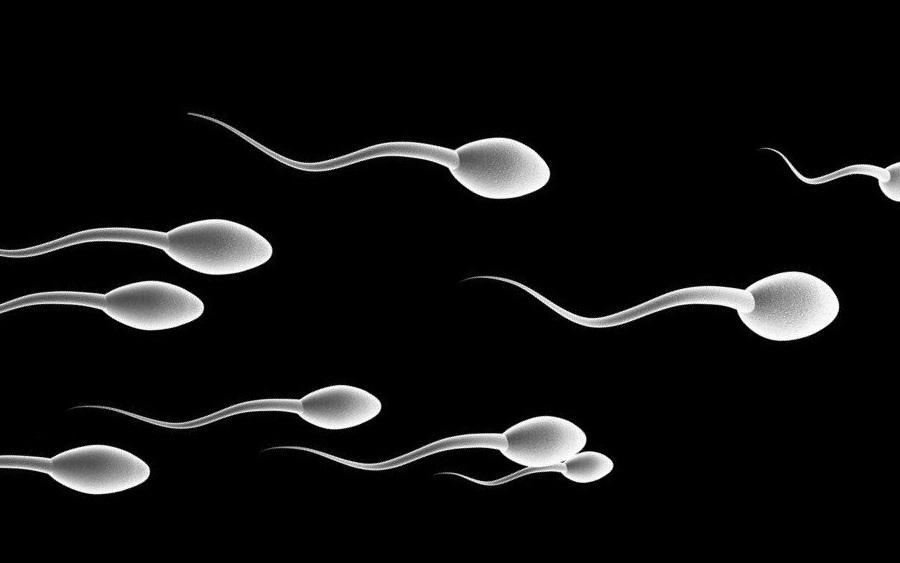 Spermler Yolunu Nasıl Bulur?