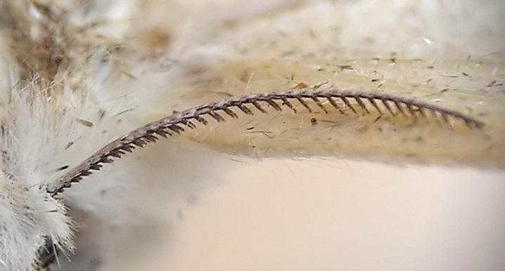 Böceklerin Anten veya Duyarga Yapıları
