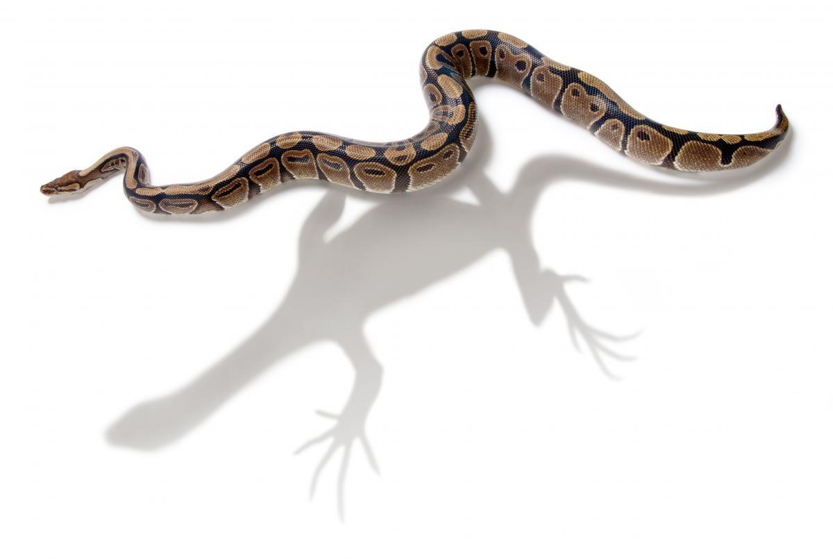 Evrim, Bir Popülasyon İçerisinde Kalıtılan Karakterlerin Nesiller İçerisindeki Değişimidir!
