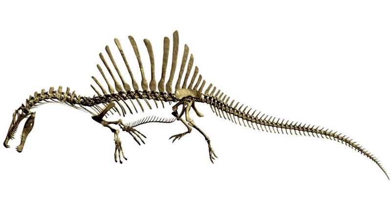 Suda yaşamış dev dinozor