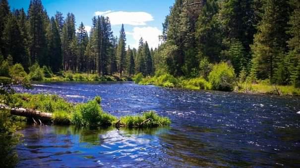 Ormanlar ve Su Arasındaki Önemli İlişki