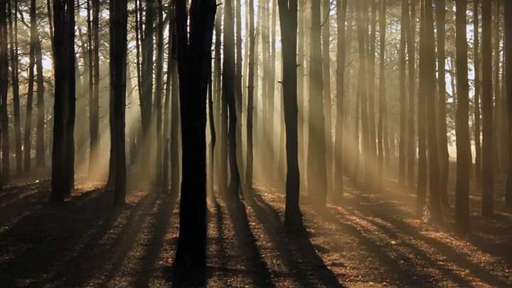 Orman için tehlikeler nelerdir?