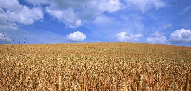 Organik Tarım Proje Hazırlama ve Yönetim