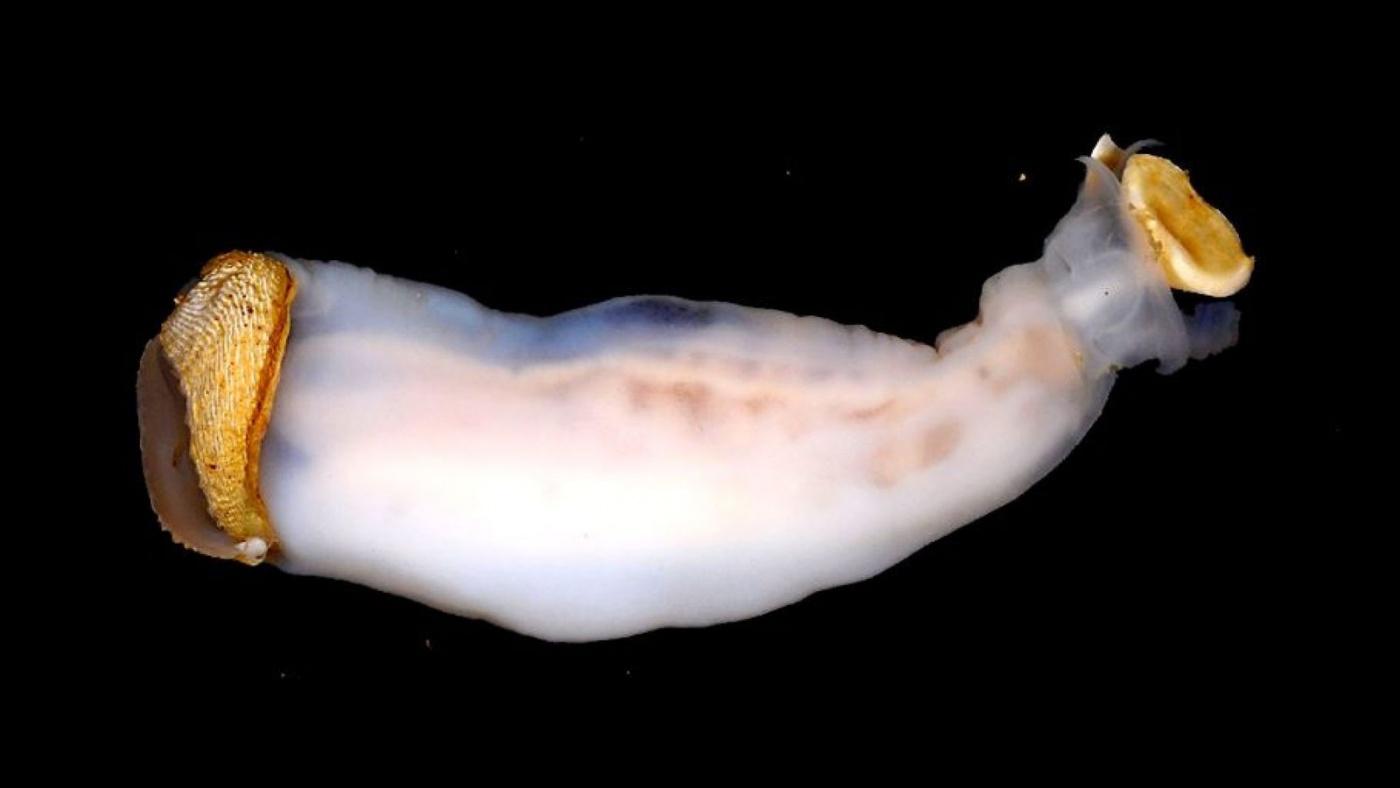 Bilim insanları, taş yiyen ve kum salgılayan yeni bir solucan alt türü keşfetti.