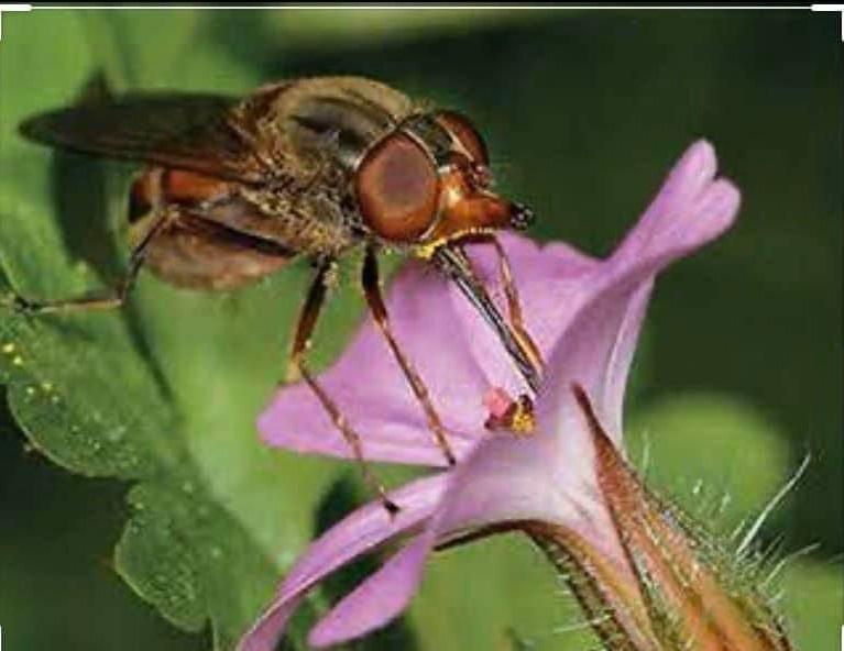 Böcekler ve Diğer Canlılar için Doğal Ormanları Koruyalım.