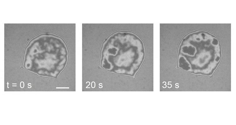 Hücreleri bir arada tutan yapıştırıcı