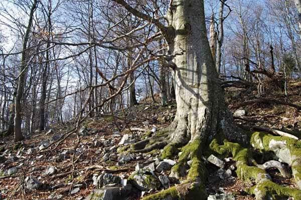 Ekonomik ormanlardaki habitat ve ekolojik olarak değerli ağaçların korunması