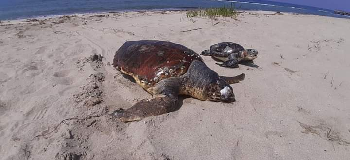 Denizlerimizde Son Durum Nedir?