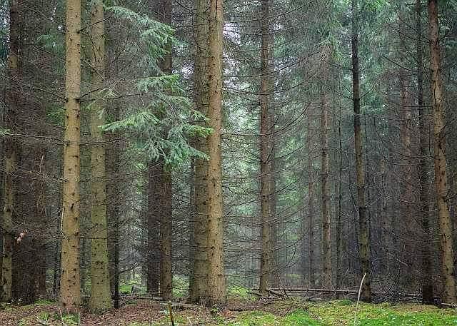 Türkiye'de kaç ağaç var?