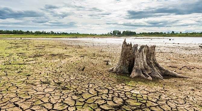 """İklim değişikliğinin yaşandığı günümüzde """"ormancılıkta risk yönetimi""""."""
