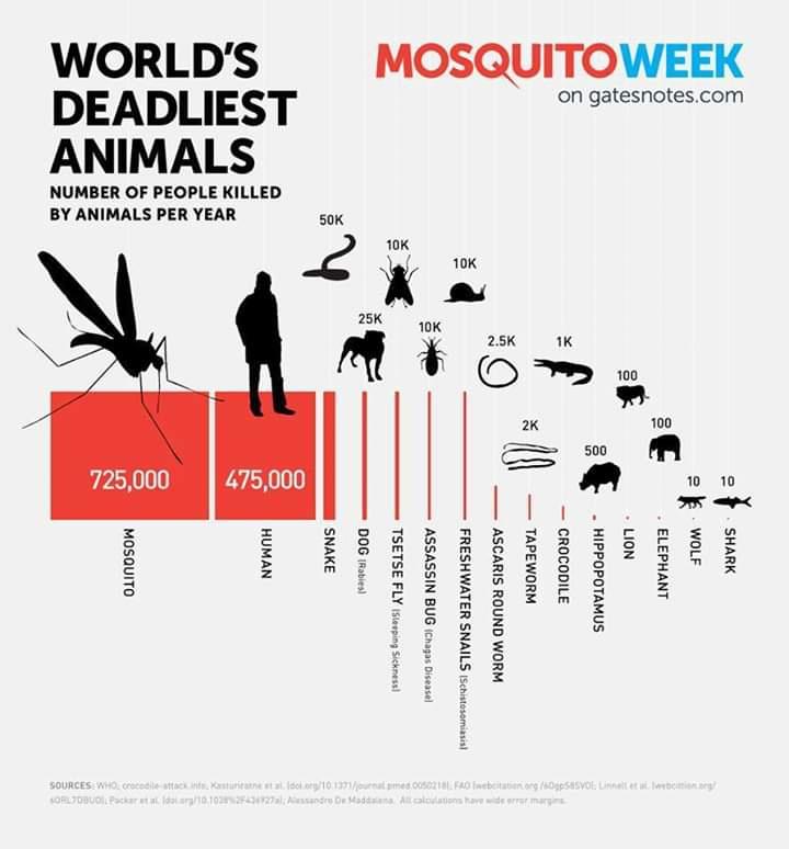 Dünyanın en ölümcül canlılarının sivrisinekler olduğunu biliyor muydunuz?