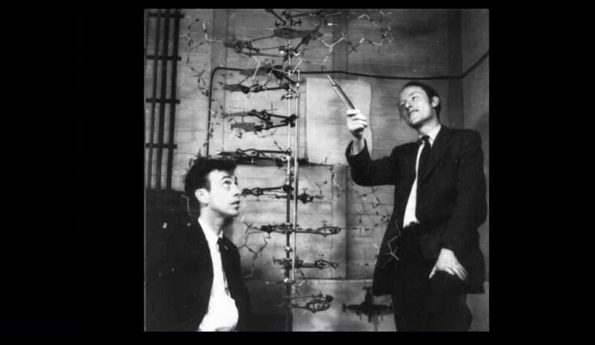 Çift sarmal DNA modelinin fotoğrafı ne zaman çekilmiştir?