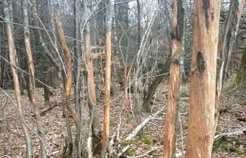 Ekosistemlerin eko-merkezli bakış acısıyla korunması