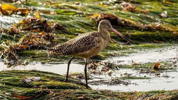 Deniz çayırlarını korumak için çok sebebimiz var.