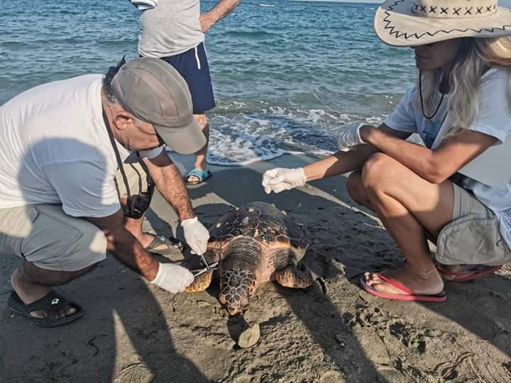 1 Yunus, 3 Deniz Kaplumbağasını Kaybettik