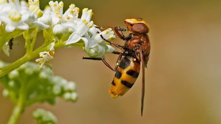Diptera takımı