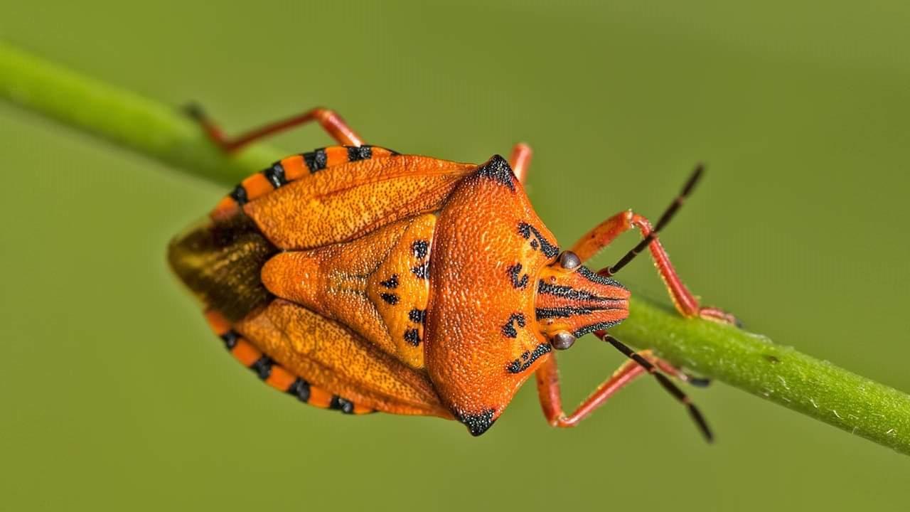 Böceklerin isimlendirilmesi hakkında bilgi