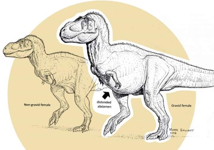 Hamile T. rex