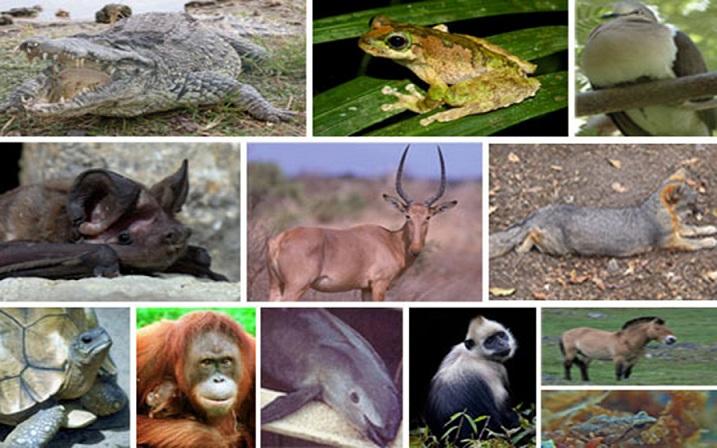 Nesli Tükenen Hayvanlar ve Yok Olmaya Etki Eden Faktörler