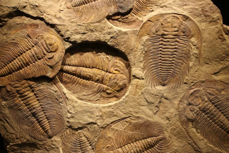 Trilobitlerin Nesli Neden Tükendi?