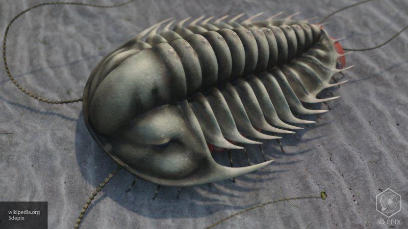 480 milyon yaşındaki trilobit fosilleri bulundu