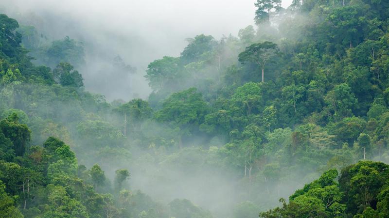 Tropikal ormanlar neden çok çeşitlidir?