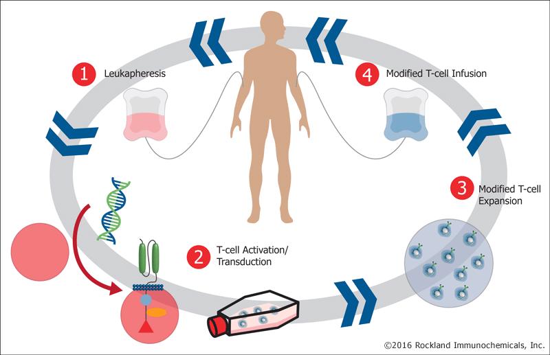 CAR-T Hücre Terapisi Nedir