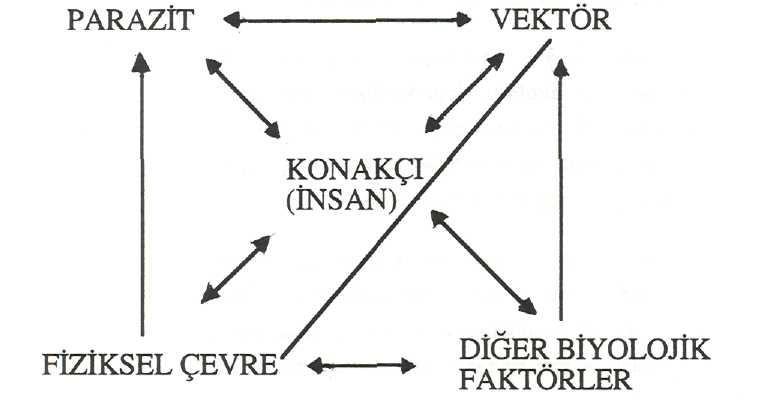 Parazit Vektör Ekolojisi ve İlişkili Faktörler
