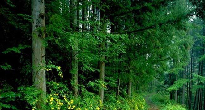 Ormanların Korunması