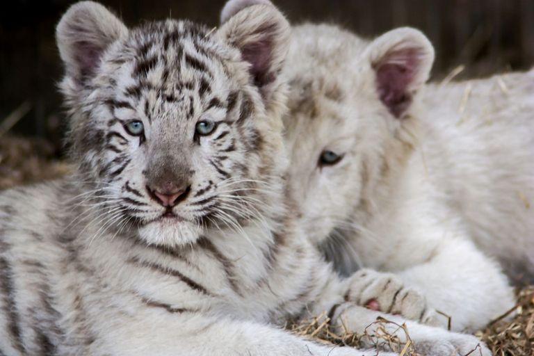Hayvanlar ile İlgili Sorular ve Cevaplar