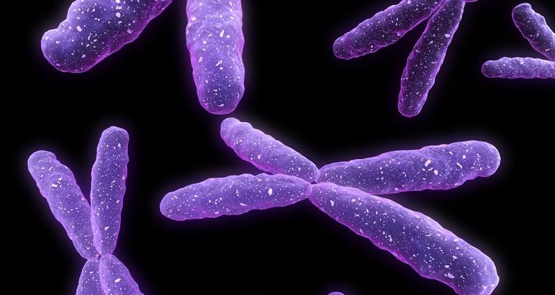 Barr Cisimciği: İnaktif X Kromozomu