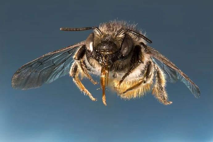 Orman ekosisteminde yaban arılarını rolü nedir?