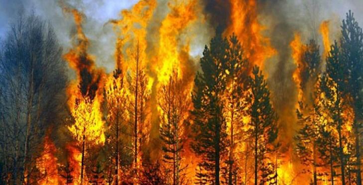 Çevre Kirliliği Ve Orman Yangınlarının Sebepleri Nelerdir ?