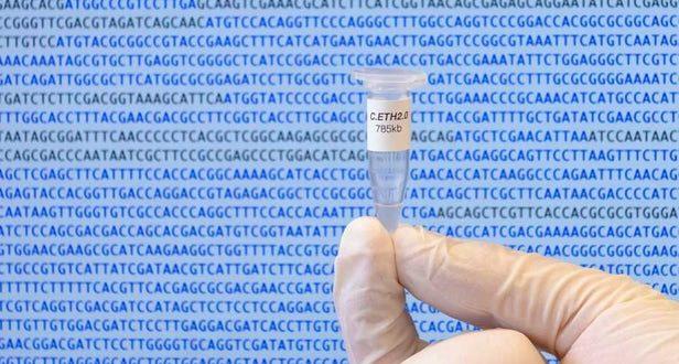 Yapay Genom ile Sentetik Yaşam Formu Üretilebilir