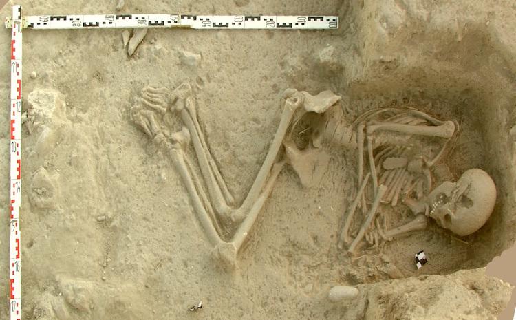 8.000 Yıl Önce Avrupa'ya İlk Tarımı Egeliler Getirdi