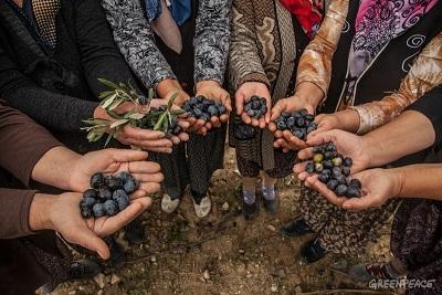 Türkiye Zeytini Seviyor