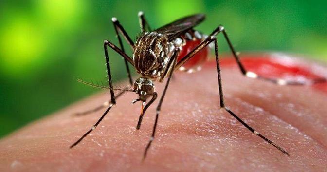 Zika Virüs RNA 'sının Varlığı ve Kalıcılığı